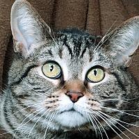 Adopt A Pet :: Sassy - Renfrew, PA