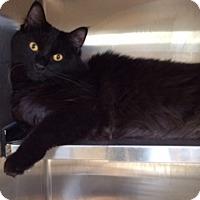 Adopt A Pet :: Lalo (Tina's housemate) - Trenton, NJ