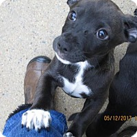 Adopt A Pet :: TIKA - Lincolndale, NY