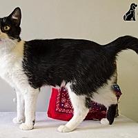 Adopt A Pet :: MOO - Sandusky, OH