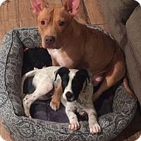 Adopt A Pet :: Keela - Summerville, SC