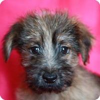 Adopt A Pet :: Almond - Bedminster, NJ