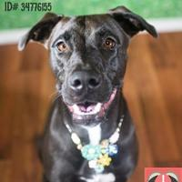 Adopt A Pet :: Honey* - Lonely Heart - Gulfport, MS