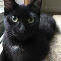 Adopt A Pet :: Hemingway - Canastota, NY