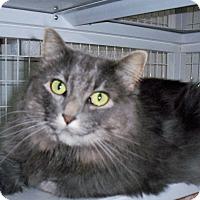 Adopt A Pet :: Misty - Gunnison, CO