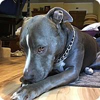 Adopt A Pet :: Dozer - Cerritos, CA