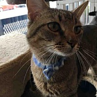 Adopt A Pet :: SID - Canfield, OH
