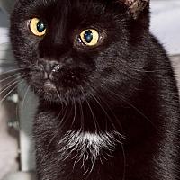 Adopt A Pet :: Aaron - Philadelphia, PA