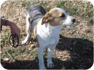 Beagle/Beagle Mix Dog for adoption in Edon, Ohio - Bubbles