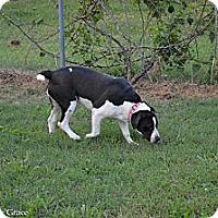 Adopt A Pet :: Layla - Woodlawn, TN