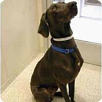 Adopt A Pet :: AJ - Attica, NY
