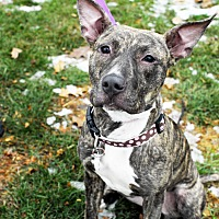 Shepherd (Unknown Type) Mix Dog for adoption in Detroit, Michigan - Milky Way-Pending!