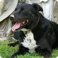 Adopt A Pet :: Boo - Los Angeles, CA