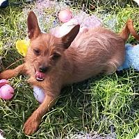 Adopt A Pet :: Tuck - East Hartford, CT