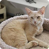 Adopt A Pet :: George - Fountain Hills, AZ