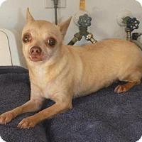 Adopt A Pet :: Amaya Senior Orlando - Alpharetta, GA