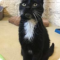 Adopt A Pet :: Alfred - Chula Vista, CA