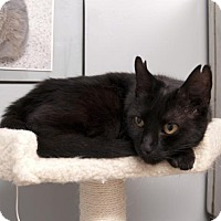 Adopt A Pet :: Annabelle - Scituate, MA
