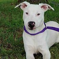 Adopt A Pet :: TITAN - Rogers, AR