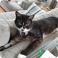 Adopt A Pet :: Dunbar - Vancouver, BC