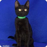 Adopt A Pet :: Stormy - Carencro, LA