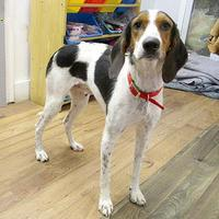 Adopt A Pet :: Sally Ann - Fayetteville, TN