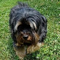 Adopt A Pet :: Annie - Alexandria, KY