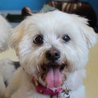Adopt A Pet :: Cosmo - San Francisco, CA