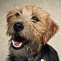 Adopt A Pet :: Susie - Winters, CA