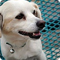 Adopt A Pet :: Muffin - Phoenix, AZ