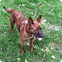 Adopt A Pet :: Nala - Westerville, OH