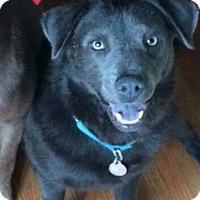 Adopt A Pet :: Reign - Marietta, GA