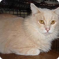 Adopt A Pet :: Morris - Dallas, TX