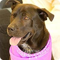 Adopt A Pet :: Buddy (Courtesy Listing) - Scottsdale, AZ