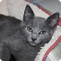 Adopt A Pet :: Mustang (LE) - Little Falls, NJ