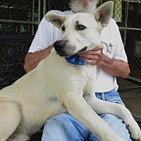 Adopt A Pet :: C1119   Jackson - Bay Springs, MS
