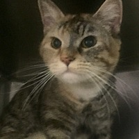 Adopt A Pet :: Ruth-Are you my special home? - Manchester, NH