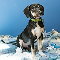 Adopt A Pet :: Dwight - Houston, TX
