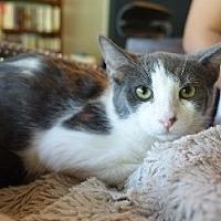 Adopt A Pet :: Rya - Woodland Hills, CA