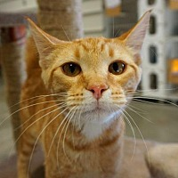 Adopt A Pet :: Gossamer - Park City, UT