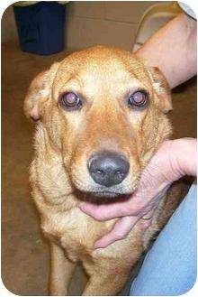 Dachshund Mix Puppy for adoption in Osceola, Arkansas - Molly
