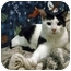 Photo 1 - Domestic Shorthair Cat for adoption in Portland, Oregon - Albert (with Cecil)
