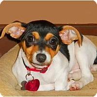 Adopt A Pet :: Rumba - Oklahoma City, OK