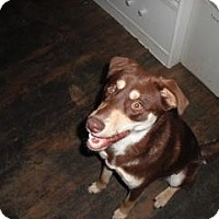 Adopt A Pet :: Cocoa - Houston, TX