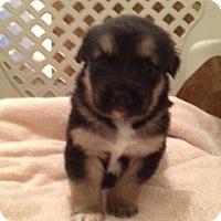 Adopt A Pet :: Mike - Palmyra, WI