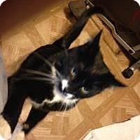 Adopt A Pet :: Pansy - Loveland, CO