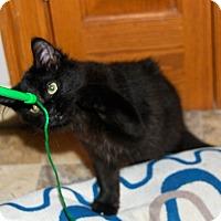 Adopt A Pet :: Foxy - Chicago, IL