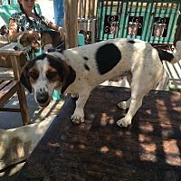 Adopt A Pet :: Annabelle - Acton, CA