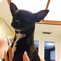Adopt A Pet :: GARY - PT ORANGE, FL