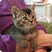 Adopt A Pet :: Bennatt - Smithfield, NC